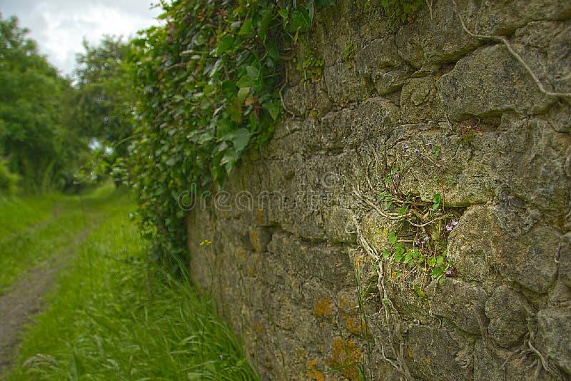 Muur in Normandië stock fotografie