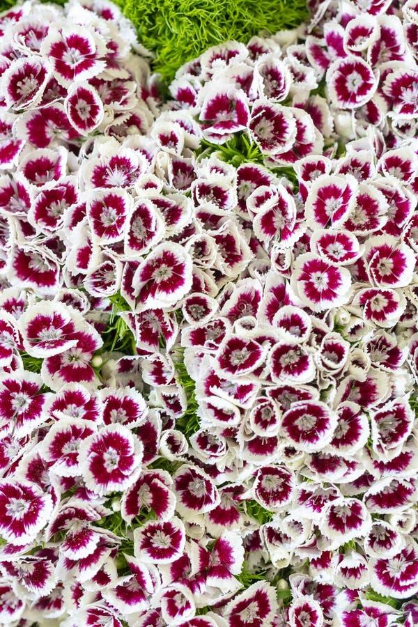 Muur van bloemen en kruiden stock afbeeldingen