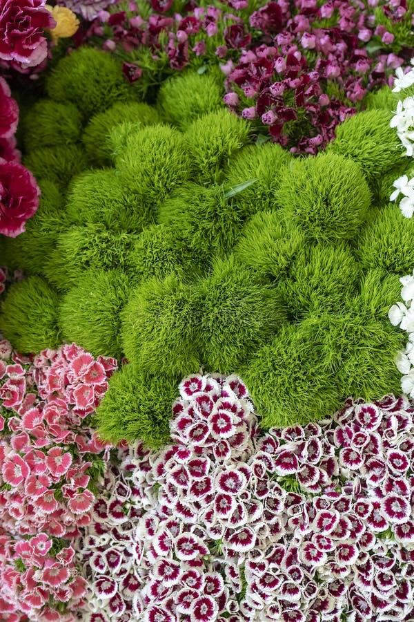 Muur van bloemen en kruiden royalty-vrije stock foto's