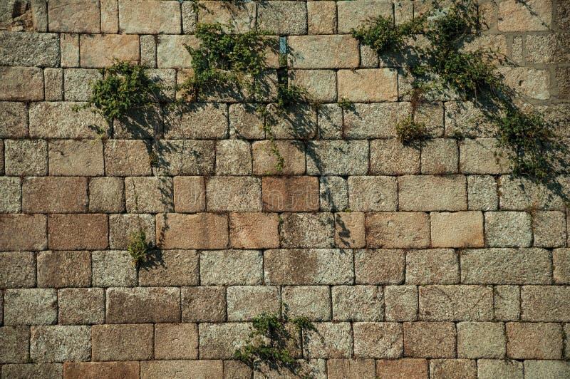 Muur van grote baksteenstenen en groene installaties wordt gemaakt die stock foto's