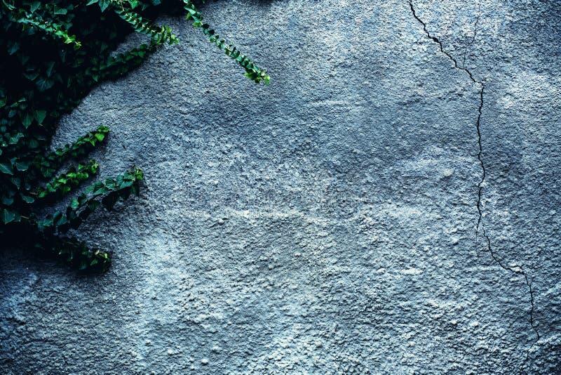 Muur van lichte baksteen en naakte takken die omhoog hierboven plakken van stock foto