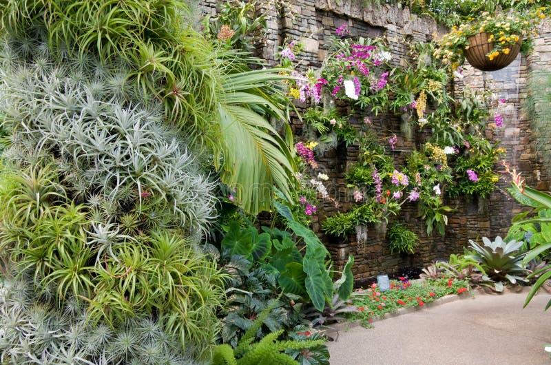 Muur van Orchideeën royalty-vrije stock afbeeldingen