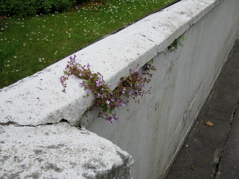 Muurbloemen stock afbeelding