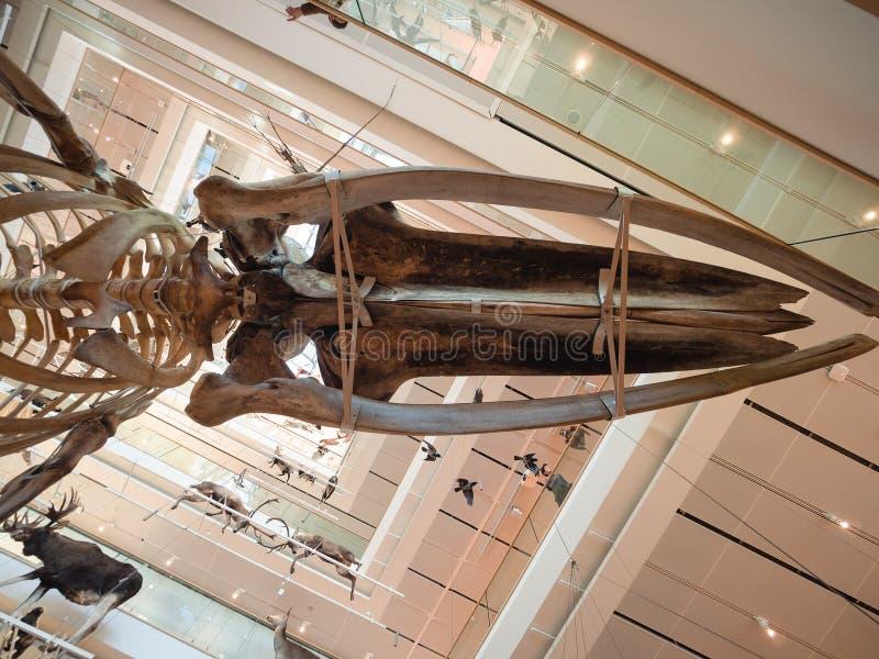 Muza jest muzeum nauki Trento Wnętrze ja obrazy stock
