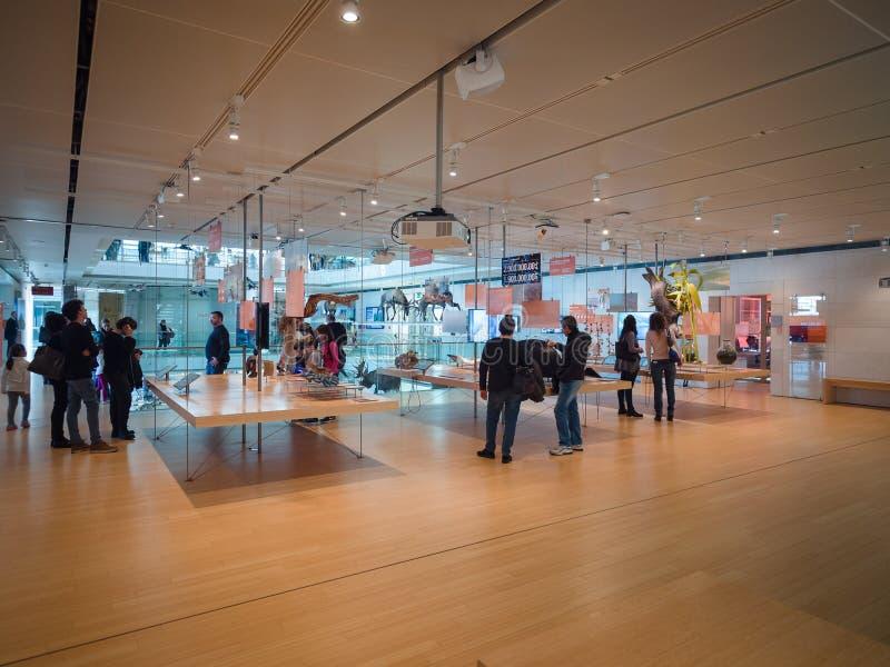 Muza jest muzeum nauki Trento Wnętrze ja obraz stock