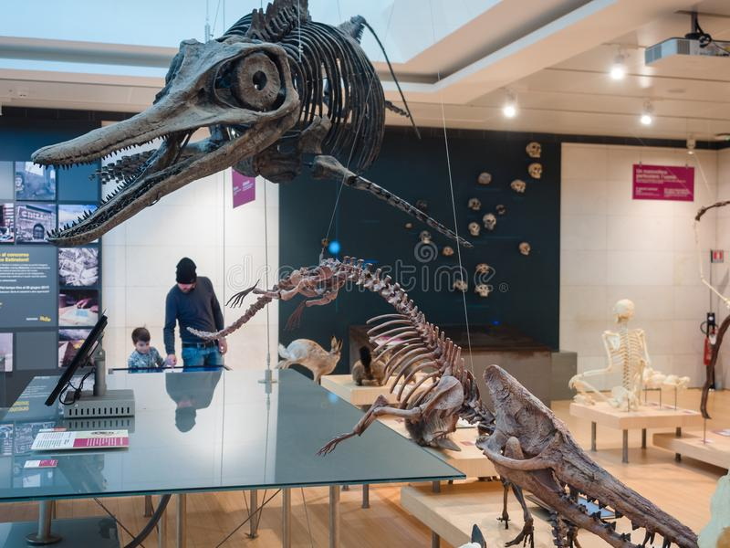 ` muzy ` jest muzeum nauka w Trento projektował Włoskim architektem Renzo Piano zdjęcia stock