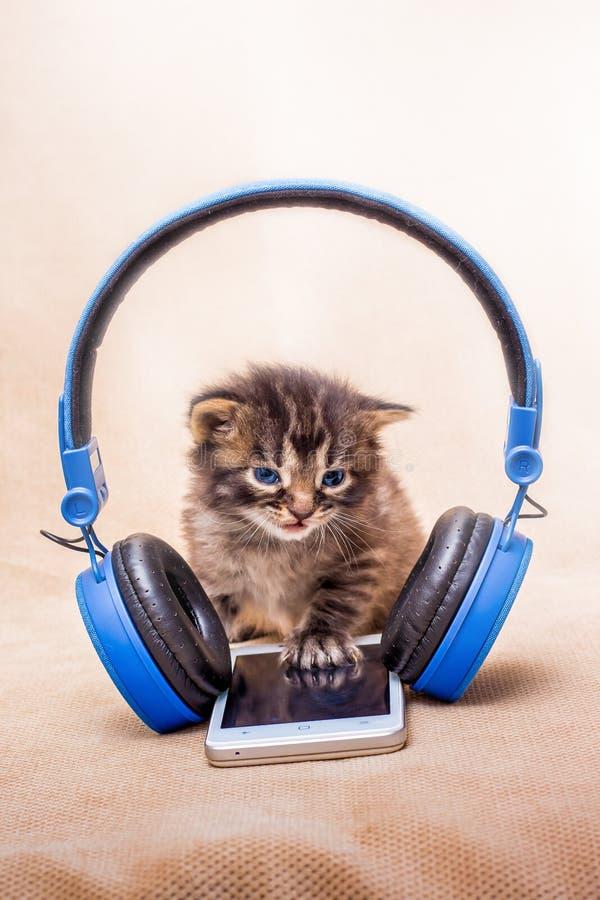 Muzyka Klasyczna wieczór Mała figlarka blisko headp i telefonu obraz royalty free