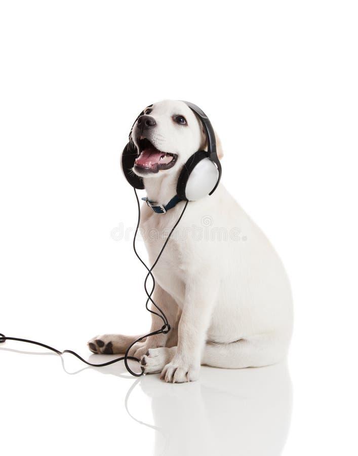 Muzyka psi słuchanie obraz stock