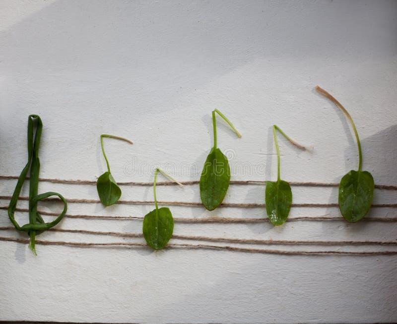 Muzykalna notatka od zielonych liści, biały tło fotografia stock