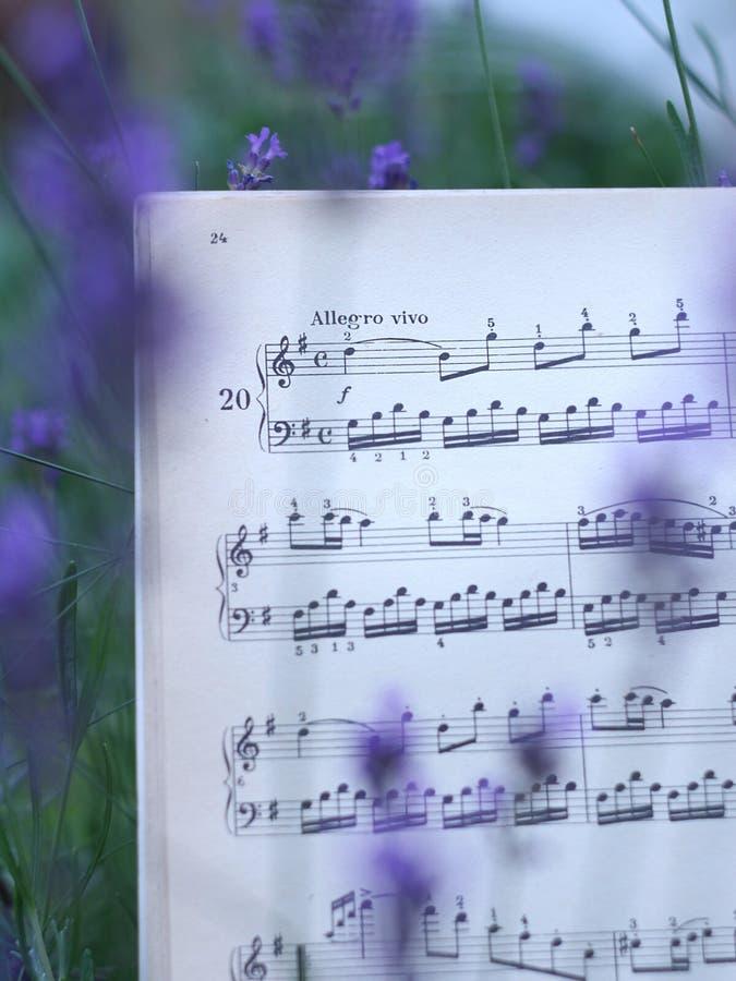 Muzykalne notatki wśród lawendowych kwiatów zdjęcie stock