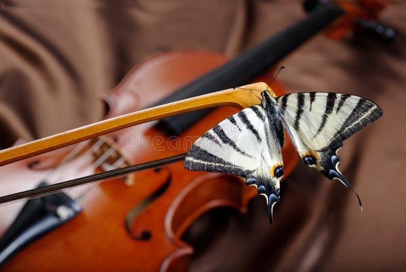 Muzykalny pojęcie Skrzypce i motyl motyl na łęku fotografia royalty free