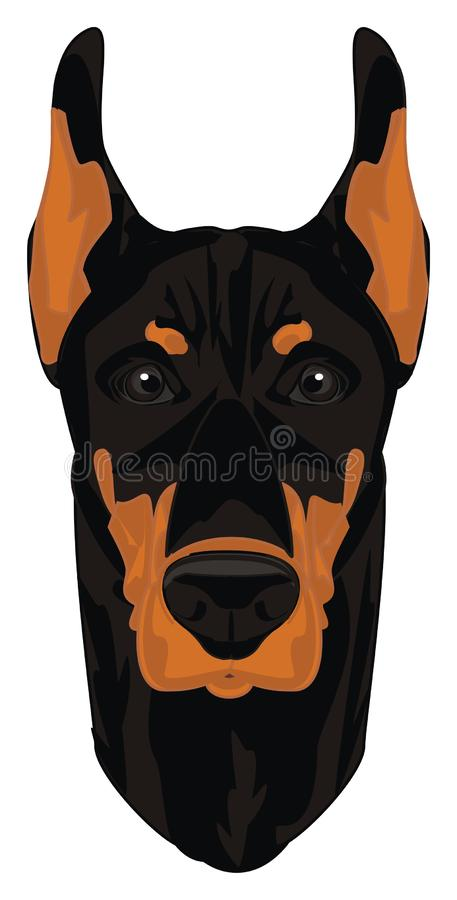 Muzzle of dog. Kind muzzle of black doberman royalty free illustration