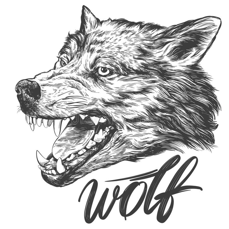Muzzle of a wolf, wildlife hand drawn vector illustration realistic sketch.  stock illustration
