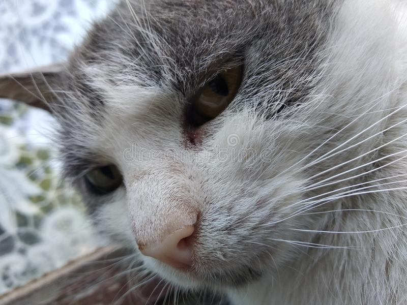Myślący śliczny kot zdjęcie royalty free