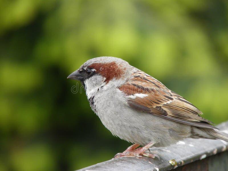 Myślący ptak obrazy stock