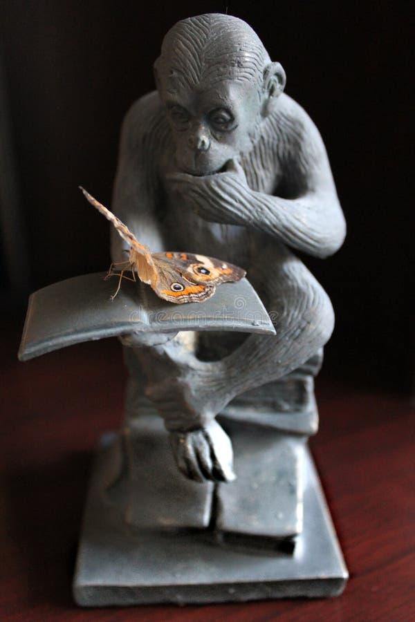 Myślący szympans - Czytać motyla zdjęcie stock