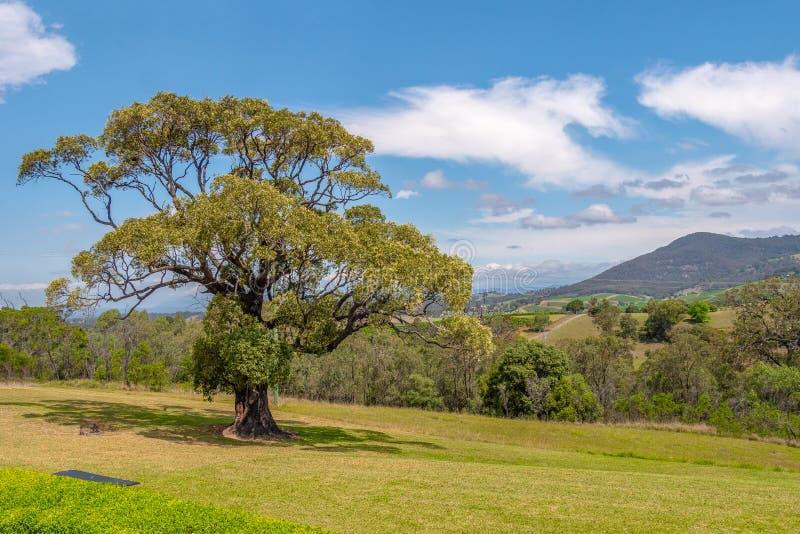Myśliwy Dolinny Vinyard NSW Australia fotografia royalty free