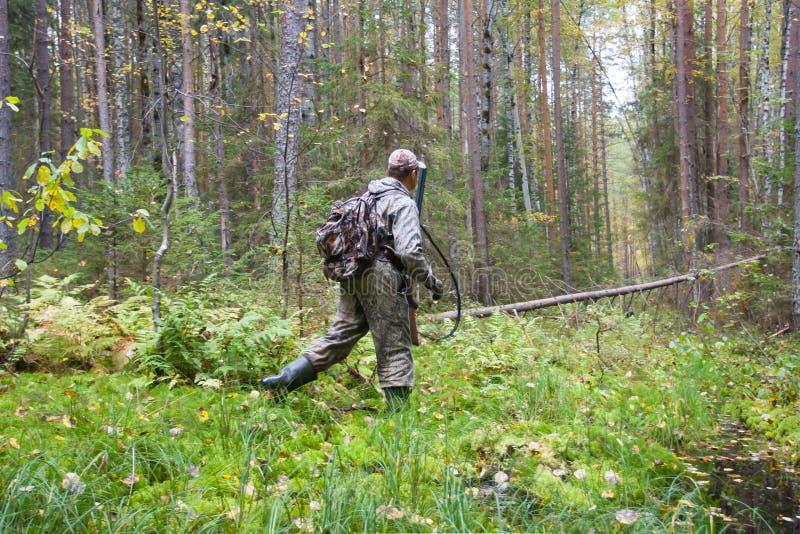 Myśliwy przechodzi wilgotnego miejsce w sosnowym lesie obraz royalty free