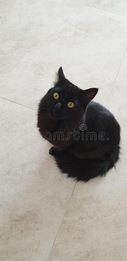 My baby cat royalty free stock image