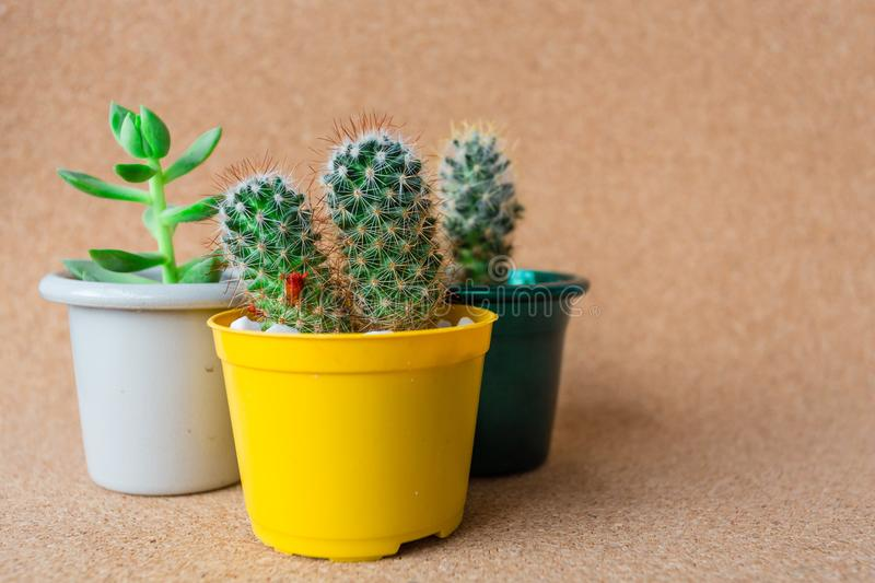My Beautiful Cactus. Image of a beautiful cactus isolated with backgrouns. Many colors and very nice royalty free stock images