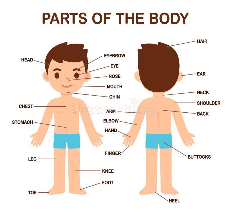 Body Parts Kids Stock Illustrations  U2013 272 Body Parts Kids