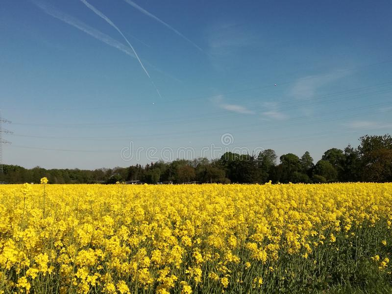 From my camera. The blue sky with the yellow flowers stock image