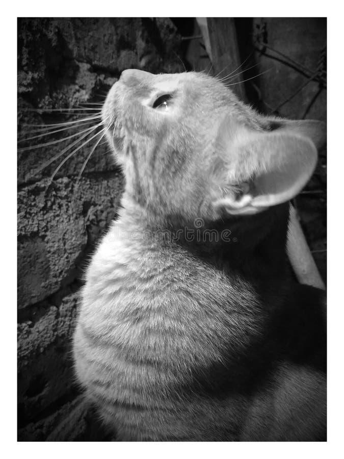My Cat Free Public Domain Cc0 Image