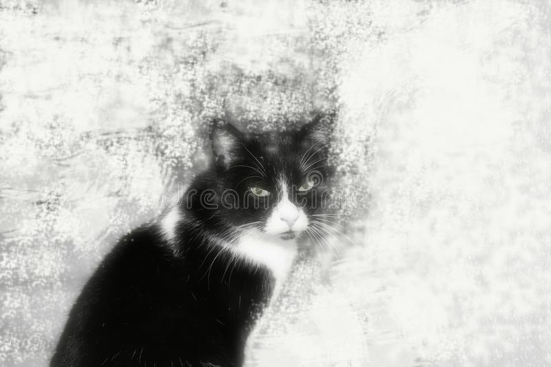 My cat. On a decorative background. It seems to me that it is frozen in space and time:-) This is my cat royalty free stock photography