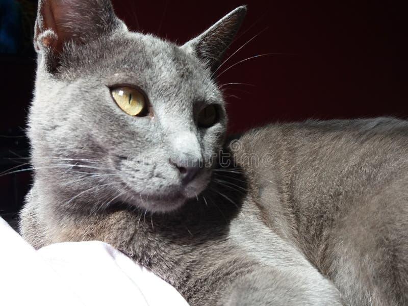 My cat royalty free stock photo