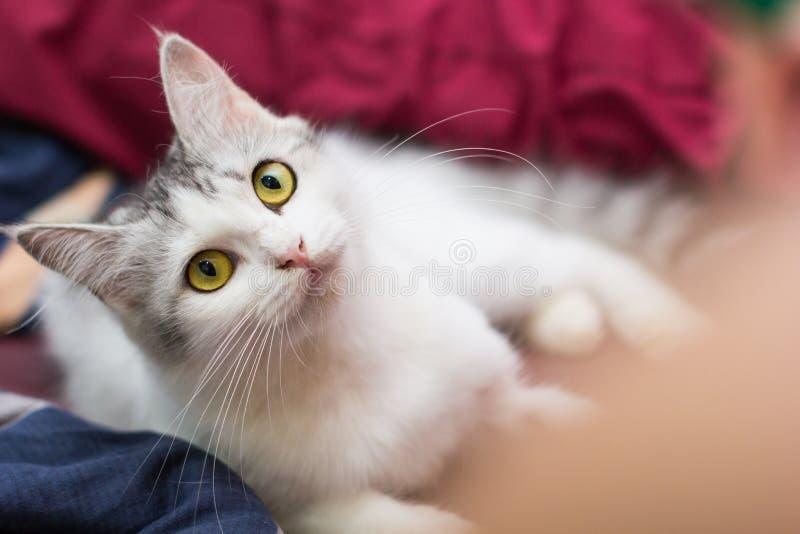 My cat. My persian cat stock photos