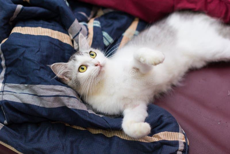 My cat. My persian cat stock photo