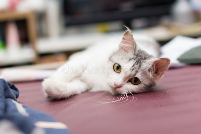 My cat. My persian cat stock image