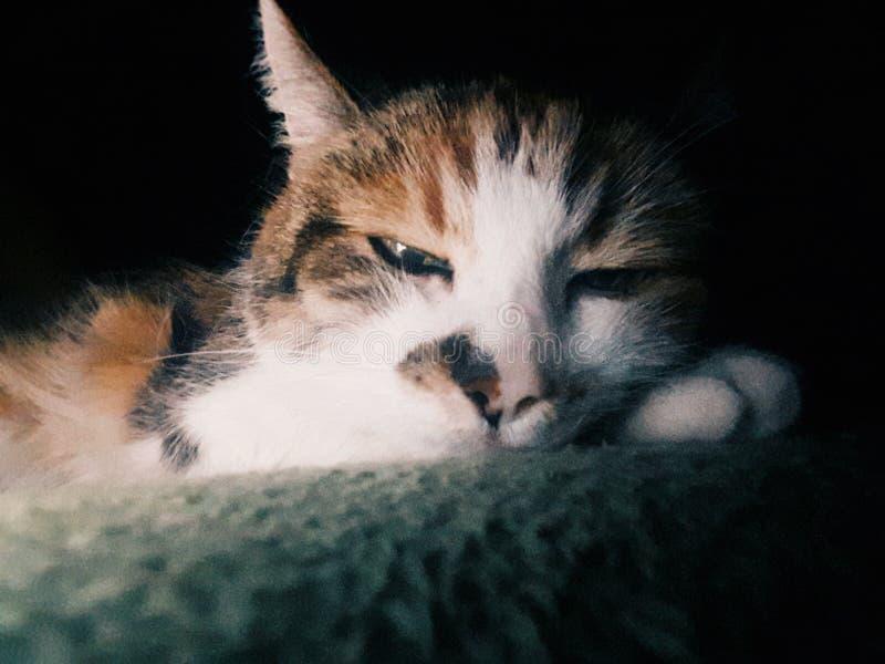 My cat stock image
