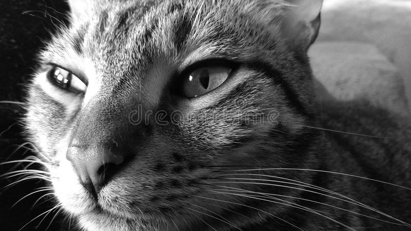 Mycat stock photography