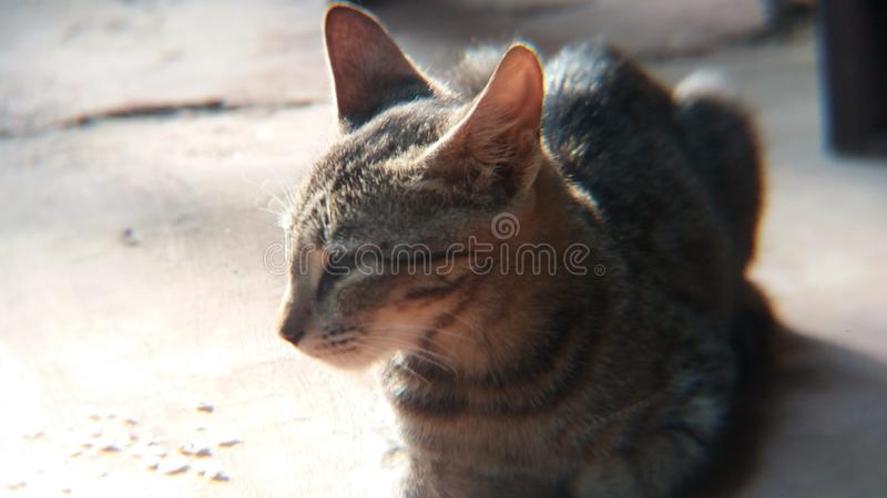 My catty royalty free stock photography