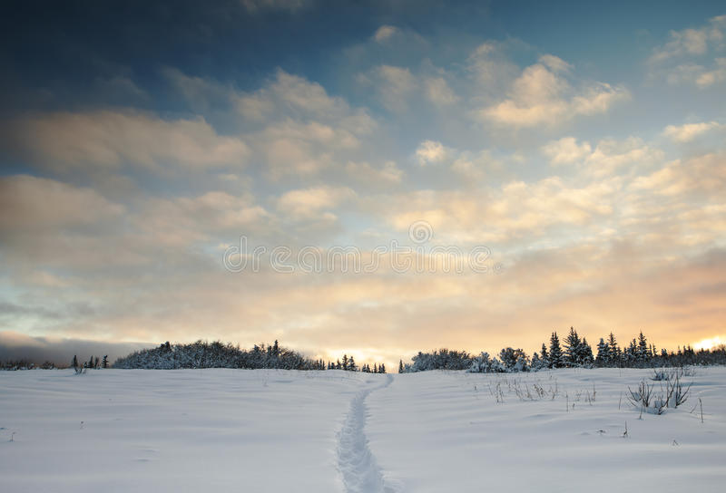 Download My Chosen Path stock photo. Image of winter, trail, scenic - 28489108