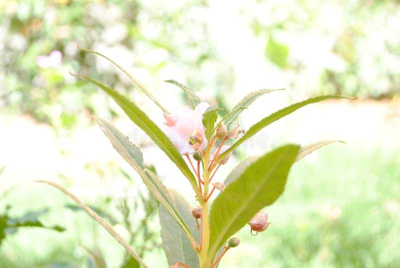 My click. Nikon nature love greenary stock photography
