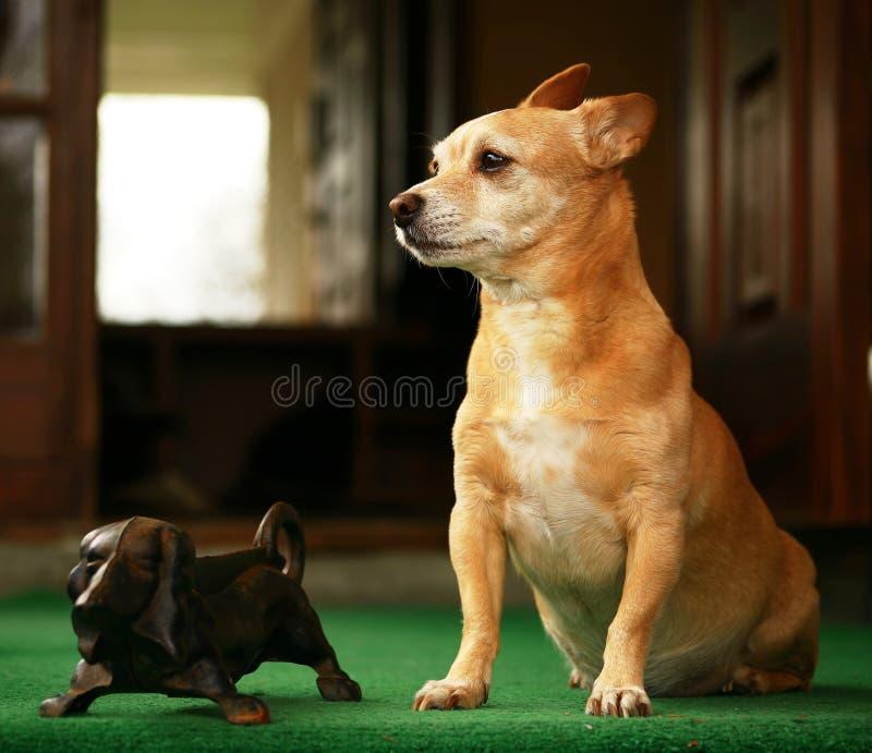 My dog royalty free stock image
