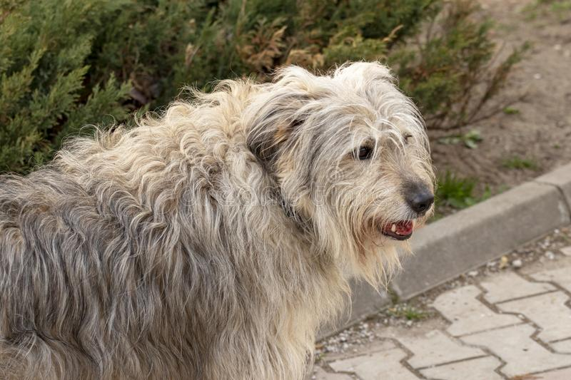 Fluffy dog smiling royalty free stock photography