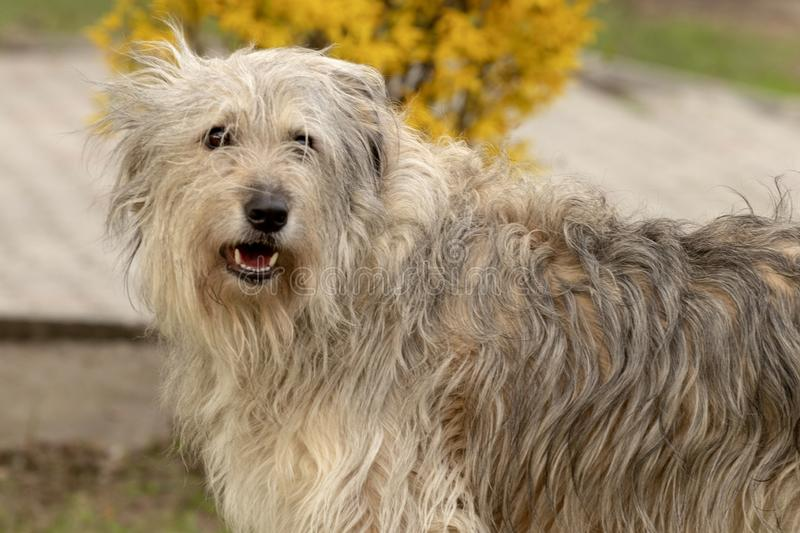 Smiling Fluffy dog royalty free stock image
