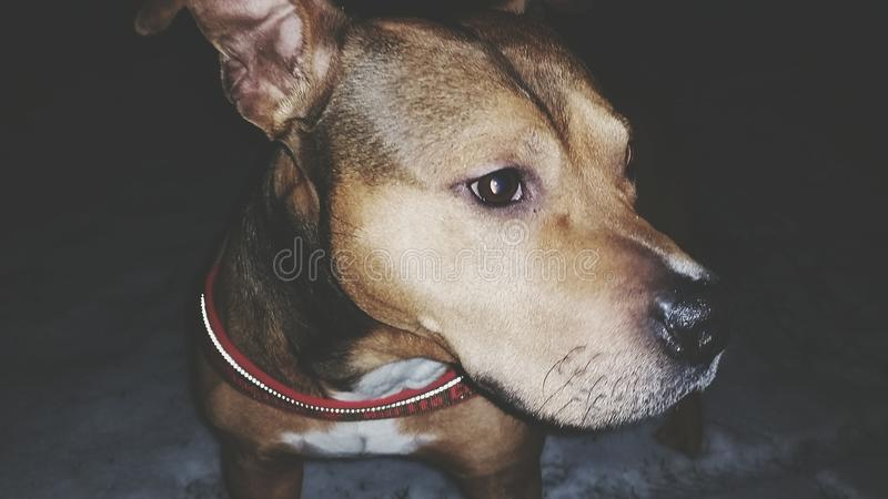 My dog royalty free stock images