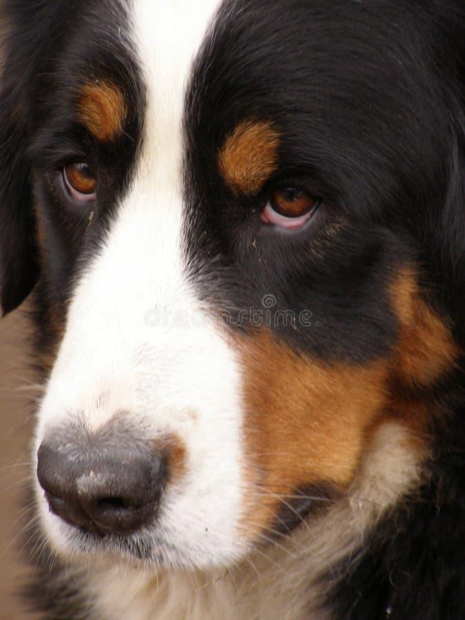 Free My Dog1 Stock Image - 5830221