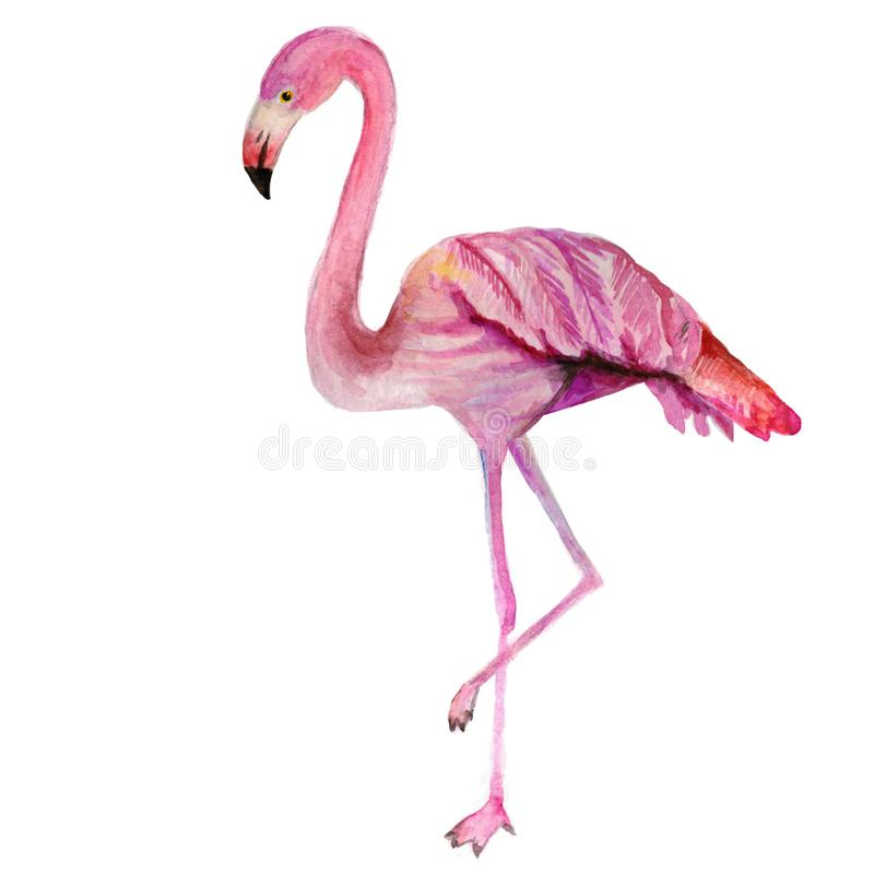 My drawing of a cute bright pink flamingo royalty free illustration