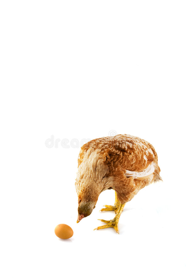 Is that my egg? stock image
