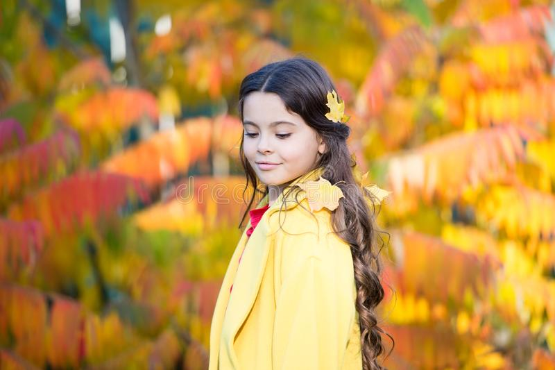 My favorite color is october. Little girl wear autumn leaves in long brunette hair. Best autumn hairstyle. Creating. Hairstyle using fall leaves. Having fun royalty free stock images