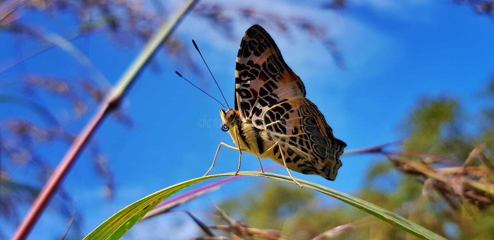 this is my favourit photos and moment because the butterfly not scary when i take from my hand stock image