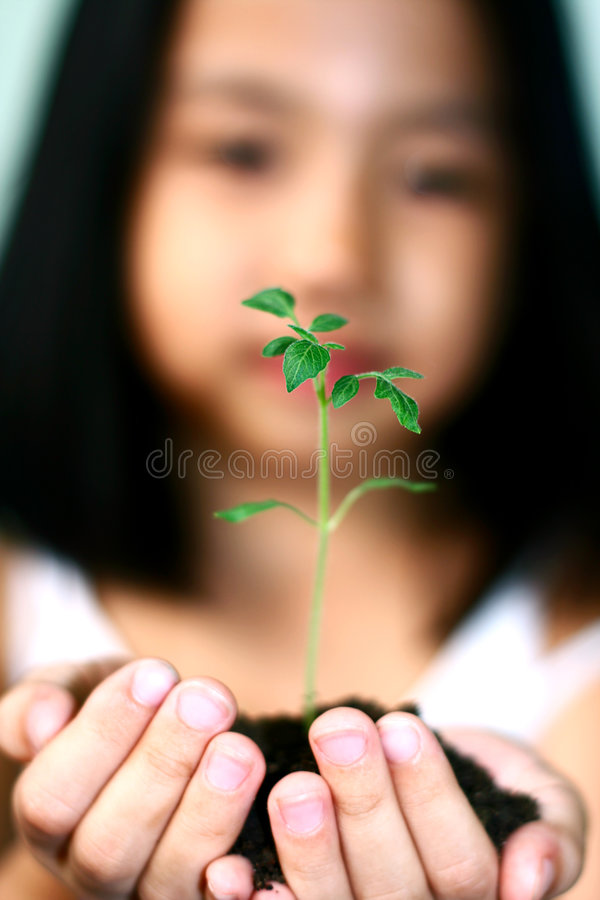 Download My future stock image. Image of seedling, food, child - 3715083