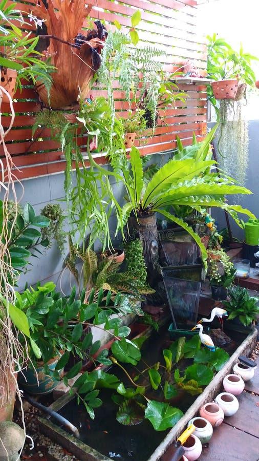 My_Garden obrazy stock