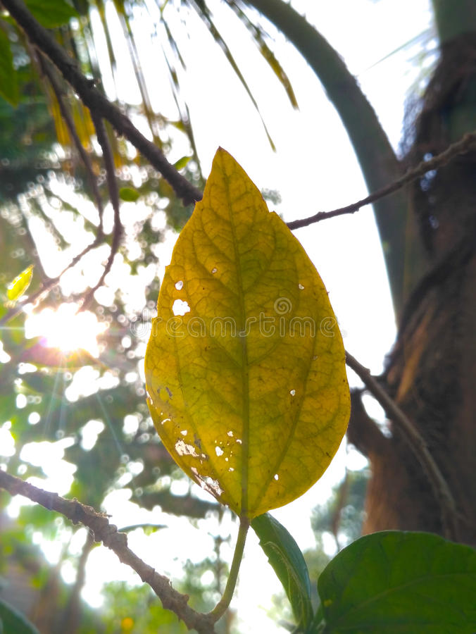 My home back side tree love them royalty free stock photos