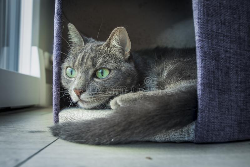 Cat with green eyes royalty free stock photos